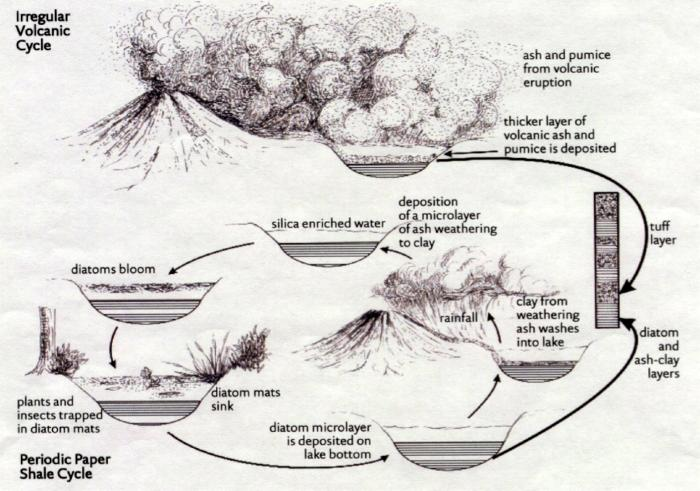 Diagram depicting how the paper-thin shales of the Florissant Formation formed